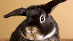 Things to Know Before Buying a Rabbit