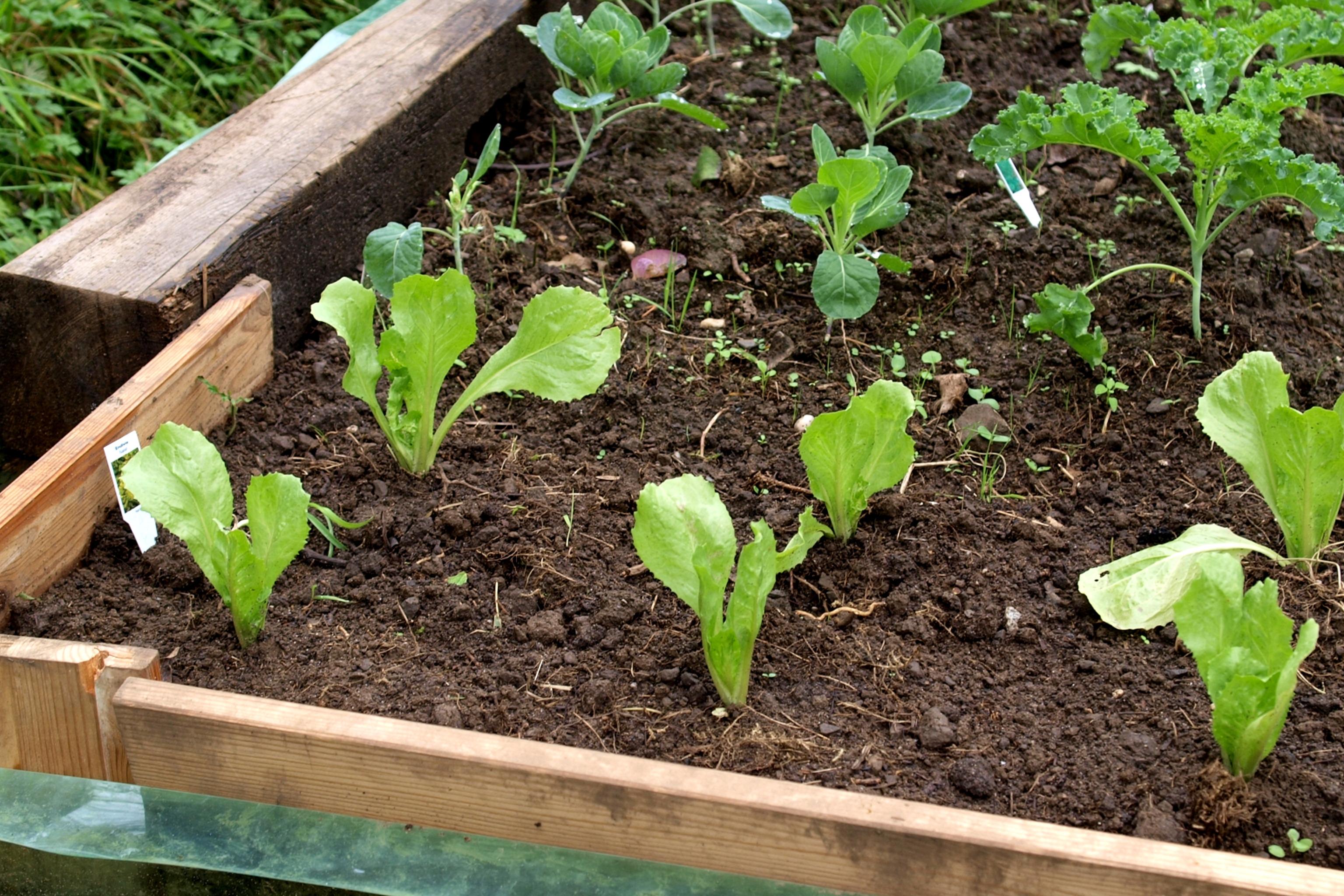 Plant an Outdoor Garden Bed - DIY