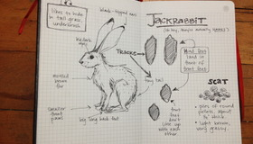 Jackrabbit Profile