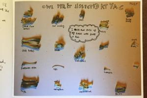 Dissect an owl pellet