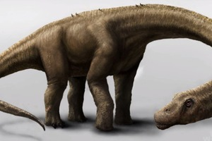 Dreadnoughtus - New Dinosaur Discovery!