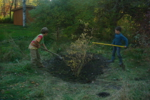 Jacob Plants a Corkscrew Willow