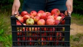 Urban Fruit Program