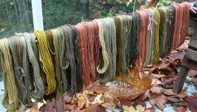 Mushroom Dyeing