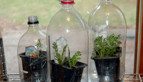 Plastic Bottle Greenhouses