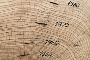 How to Read Tree Rings
