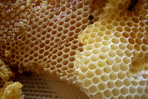 How to Collect and Bottle Honey