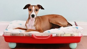 15 Ways to Make a Pet Bed