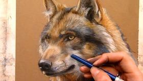 Wolf in Pastel