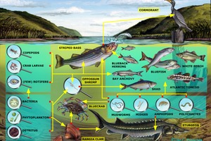 Pond Food Web