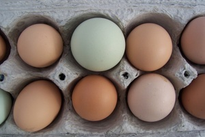 How to Collect and Clean Eggs