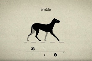 Dog Walking Styles - Animal Gaits for Animators