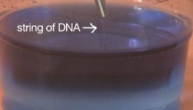 Extract Your Own DNA