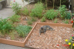 Simple Sheet Mulch Herb Garden