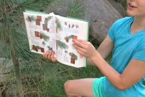 Identifying Ponderosa Pine