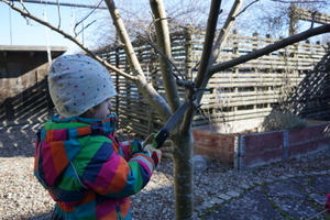 Pruning the backyard apple tree
