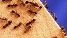 Make an Ant Farm