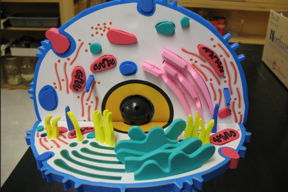 Make A 3d Model Cell Diy
