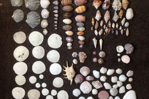 My seashell collection