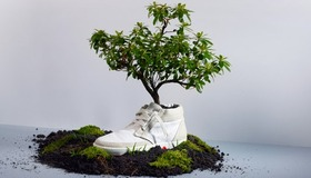 Biodegradable Tree Sneakers