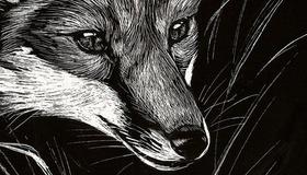 Scratchboard Fox