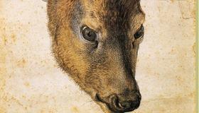 Stag by Dürer