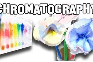 Paper Chromatography | Homemade Experiment