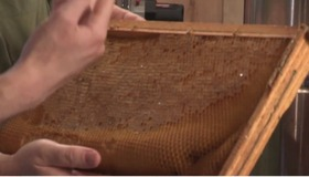 How to Make a Beehive