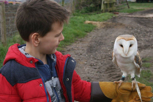 Tilly the barn owl