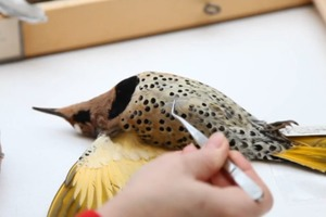 How to Identify a Bird From a Single Feather