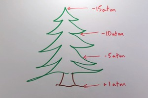 How Trees Move Water