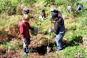 Lowcountry Tree Planting