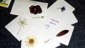 Plant ID Cards