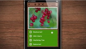 Wild Berries and Herbs App