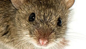 Mouse Genome Project