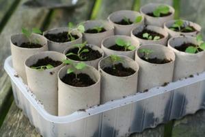 Tube Seed Starters