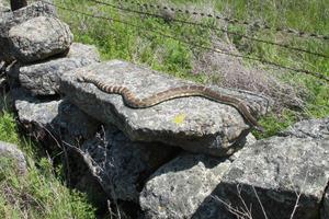 Slug Control with Snakes