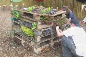 How To Build an Insect Habitat