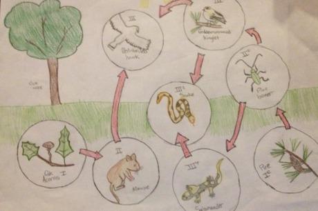 Draw A Food Web Diy