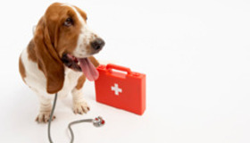 Pack an Animal First Aid Kit