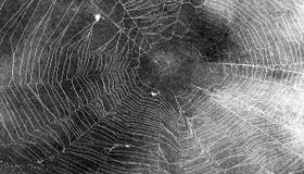 Preserve a Spiderweb