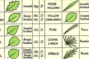 Leaf Identification Chart