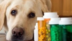 10 Pills NOT to Give Your Pet