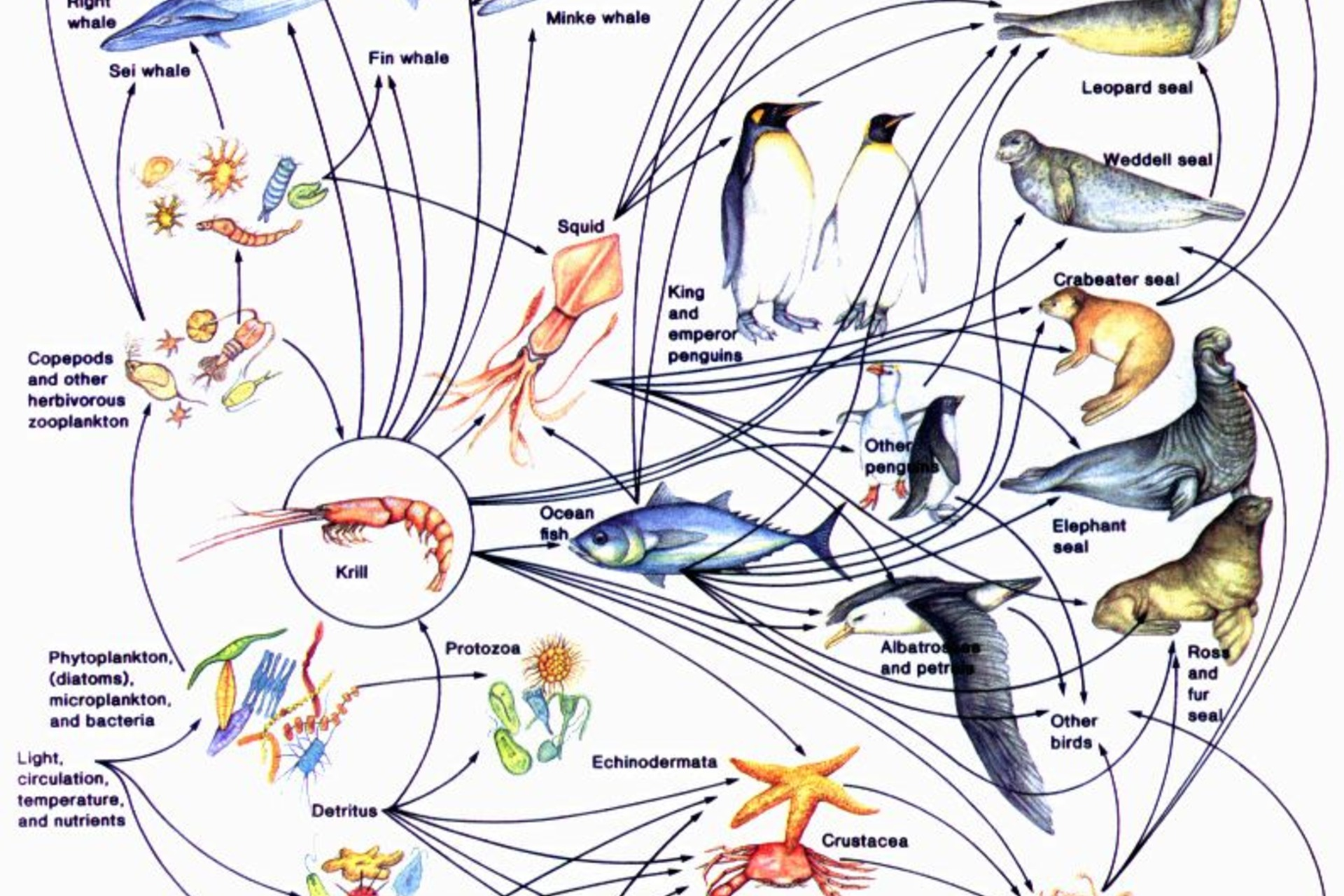 draw a food web diy