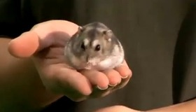 Training Your Hamster