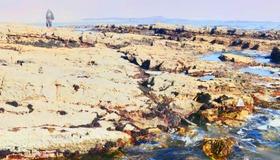 Tidepool Panorama