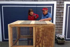 Building bunny hutch