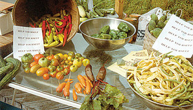 How to Start a CSA