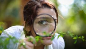 Wild Plant Identification eCourse