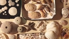 Ocean Acidification and Seashells